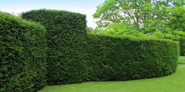 service-hedge-trimming